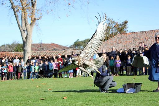 SPCA releases rehabilitated red-tailed hawk on campus